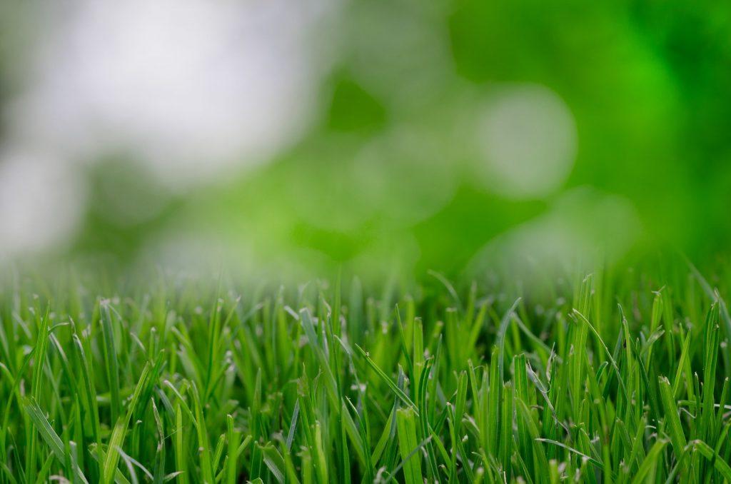 Lawn Mowing Corpus